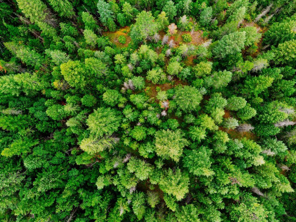 Fichtenwald von oben